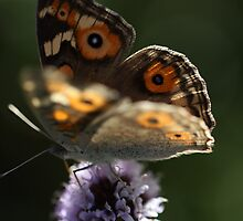 Butterfly on mint flower by Leisa Stear