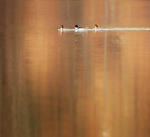 Trio Reflections by Bill Wakeley