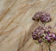 Wind Grass and Bloom by Rod Raglin