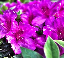 Purple Flowers in a Garden by cjohn4043