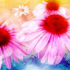 Rainbow Colored Coneflowers by SRowe Art