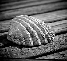 Half a sea shell on wood by Dave Hare