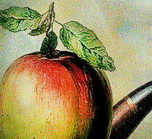 Ceci n'est pas une pomme ni une pipe Sticker
