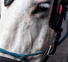 Long Eye Lashes by Karen E Camilleri