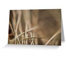 Casuarina Needles Abstract Greeting Card