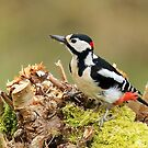 Great Spotted Woodpecker by Mark Hughes