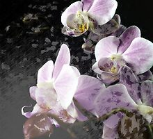 Orchids - Digital Art Abstract by Eric Ziegler