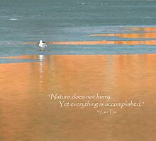 Nature Does Not Hurry by Bill Wakeley