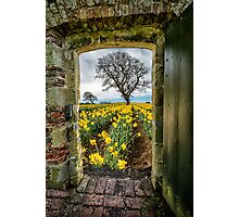 Outside The Gate Photographic Print