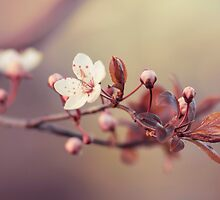 spring in the air by AnnaGo