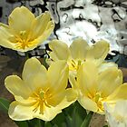 Spring Flowers and Shimmering Water by Gary Horner