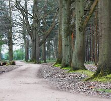 Near the Pinewood Film Studio in Black Park England by TerrillWelch