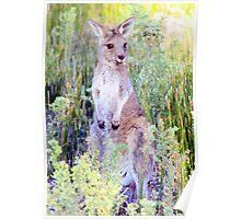 Eastern Grey Kangaroo Poster