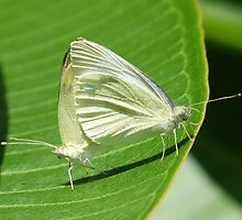 Procreation ... Butterfly Style by Trish Meyer