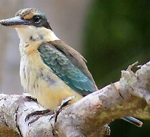 sacred Kingfisher  by Trish Threlfall