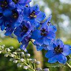 Sapphire Blues and Pale Greens - a Showy Delphinium by Georgia Mizuleva