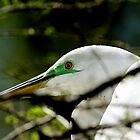 Egret Upclose in Tree by imagetj