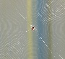 The Web by Trish Meyer