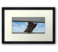 The Horse Days Hello Framed Print