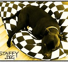 Staffy Dog Golden by amanda metalcat