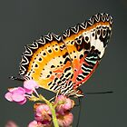 The Malay Lacewing by looneyatoms
