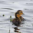 Baby Ducks by SuddenJim