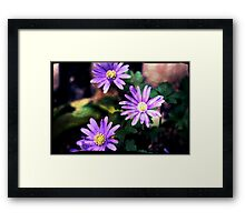 Lovely and Lilac Framed Print