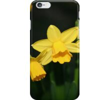 Calling the daffodils iPhone Case/Skin