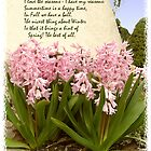 Pink Hyacinth by Kenneth Hoffman