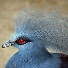 Common Crowned Pigeon  by Cynthia48