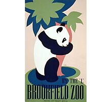 Panda and Bamboo, Brookfield Zoo Photographic Print