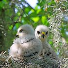 Fluffy little birds!! by jozi1