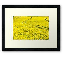 rape yellow sky blue Framed Print