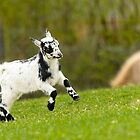 goat black white green by drdoc2000