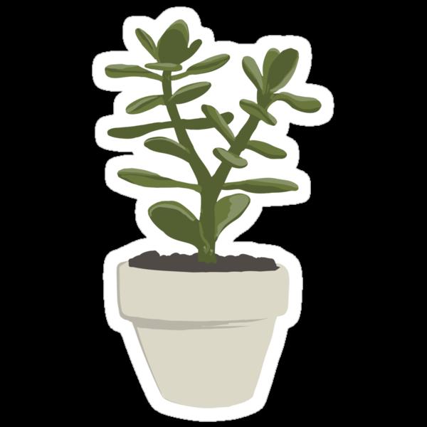 Crassula Ovata Convoluta (Money Plant) by Vicky Webb