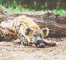 Sleeping Hyena by PatiDesigns
