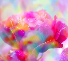 Rainbow Rose by ©Maria Medeiros