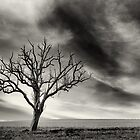 tree thunder sky clouds by drdoc2000