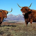 Highland ladies by Gary Richardson