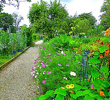 The Irish Organic Garden by Fara