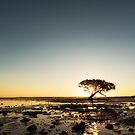 Mangrove Magic by Mieke Boynton