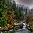 Up The River by Charles & Patricia   Harkins ~ Picture Oregon