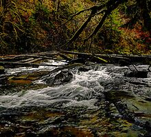 The Big Rush by Charles & Patricia   Harkins ~ Picture Oregon