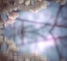 Cherry blossom in pastel by DerekEntwistle