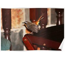 Robin in my house Poster