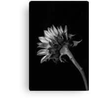 Sun Touch Canvas Print