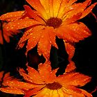 Orange Calendula Reflections by Tori Snow