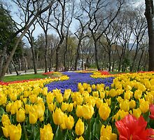 tulip park in Istanbul by laikaincosmos