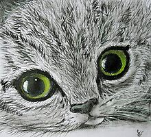Tabby by Sally Ford