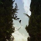 Four Starlings by Lynn Starner